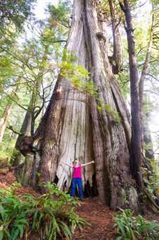 Canada's largest tree (also the largest redcedar in the world), the Cheewhat Giant! Located in Pacific Rim National Park Reserve near Carmanah on Vancouver Island. Height: 182 ft (55.5 m) Diameter: 19 ft (5.7 m) Volume: 450 m3