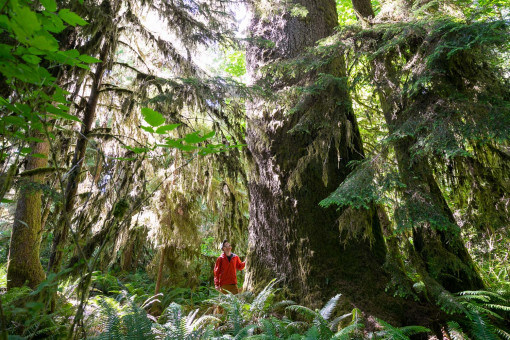 "The largest spruce in the grove, which measures 10'1"" in diameter!"
