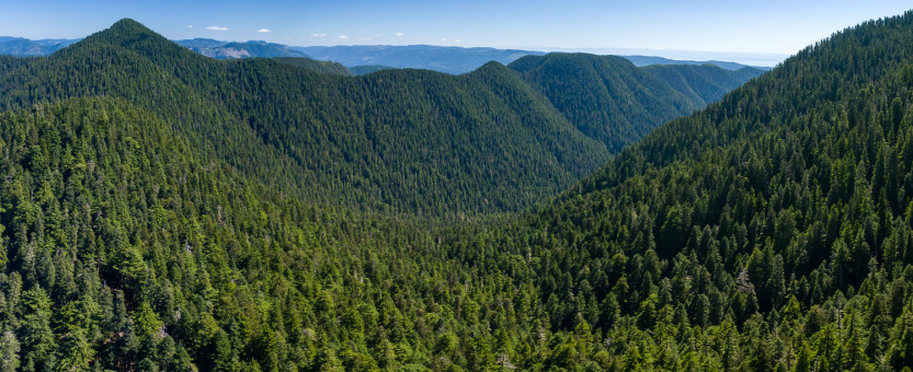 Sweeping views of the unprotected and at-risk old-growth headwaters of the Fairy Creek Valley near Port Renfrew. This valley is the last unlogged, intact valley outside of a park on southern Vancouver Island.