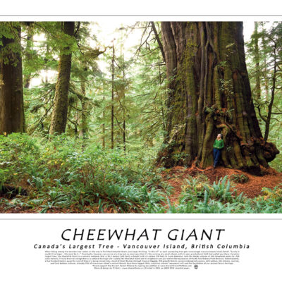 Poster of Cheewhat Giant
