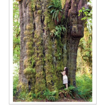 Poster of San Juan Spruce tree