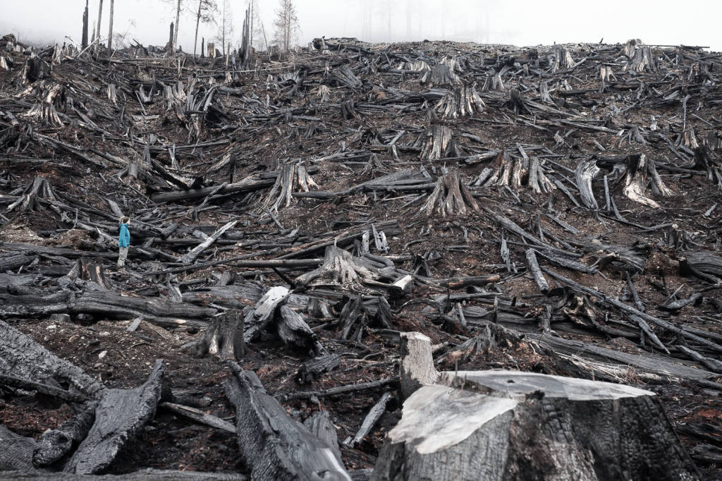A burnt-over old-growth clearcut in the Klanawa Valley on Vancouver Island.