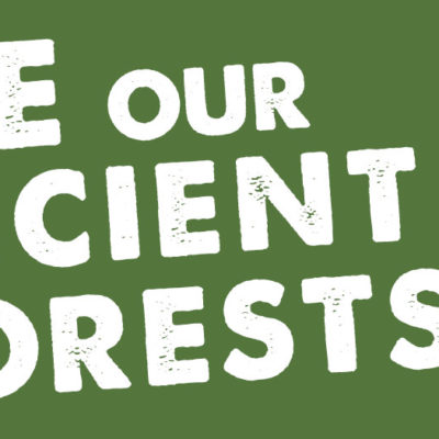 Save Our Ancient Forests Sticker