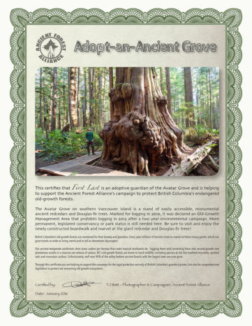 Adopt A Grove Ancient Forest Alliance