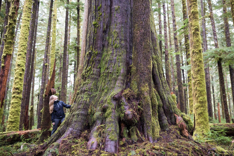 Eden Grove | Ancient Forest Alliance