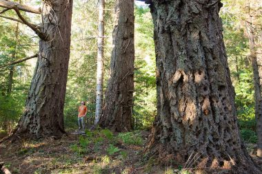 Ancient Forest Alliance campaigner and photographer TJ Watt stands among towering old-growth Douglas-fir trees in Metchosin.