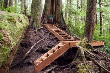 Boardwalk in the Upper Avatar Grove