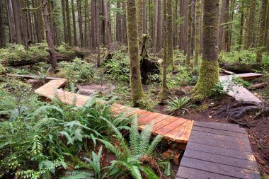 Recent boardwalk additions in the lower grove which span the area prone to Winter flooding.