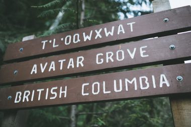 Signage at the start of the Avatar Grove trail