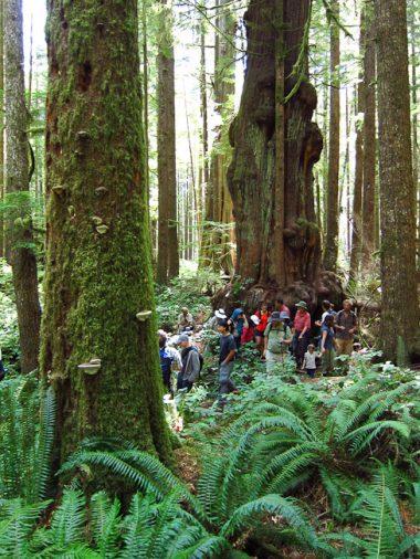 Hikers walk through the Avatar Grove during last year's Biodiversity Hike.