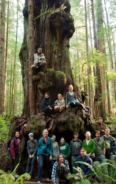 Hikers gather around the largest alien shaped cedar in the Lower Avatar Grove