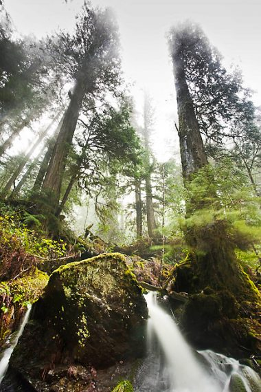 Avatar Grove on the Pacific Marine Circle Route is home to ancient fir