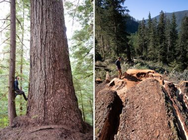 Ancient Forest Alliance campaigner TJ Watt stands next to Canada's 9th-widest Douglas-fir tree