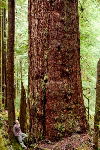 Ancient Forest Alliance photographer TJ Watt stands beside a giant old-growth Douglas-fir tree he located in the Gordon River Valley near Port Renfrew. The tree measures over 31ft in circumference