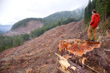 Ancient Forest Alliance Photographer & Campaigner TJ Watt stands atop an 8ft wide old-growth redcedar stump in a recent clearcut by Teal-Jones on Edinburgh Mt near Port Renfrew.