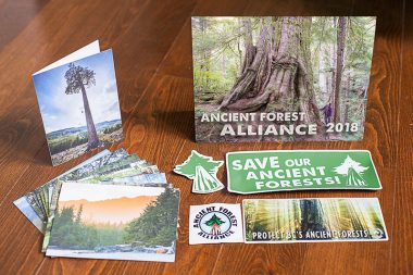 Photo: Ancient Forest Giftpack (calendar