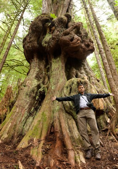 """MP Keith Martin stands in front of """"Canada's Gnarliest Tree"""" in the endangered Upper Avatar Grove."""