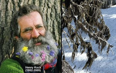 The horsehair lichen – which Hansen says resembles Kock's beard – will be known as Bryoria kockiana.