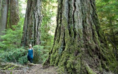 Koksilah Ancient Forest on Vancouver Island