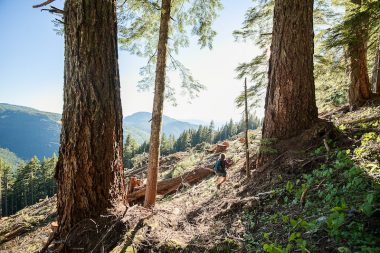 Port Alberni Watershed Forest-Alliance activist Jane Morden surveys old-growth logging by Island Timberlands on McLaughlin Ridge in the China Creek drinking watershed of Port Alberni.