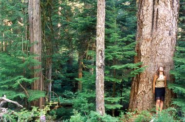 The Nahmint Valley near Port Alberni has some of the last remaining tracts of unprotected old-growth Douglas fir forests.