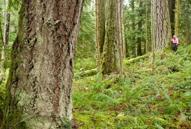 Nanoose Bay resident Helga Schmitt walks through the endangered old-growth coastal Douglas fir forest which the province has approved for logging by the Snaw-naw-as First Nation despite pleas by local governments and community groups to save the area.