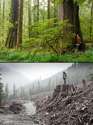 Example of spectacular temperate rainforest on Vancouver Island contrasted with nearby logging of old-growth forest.