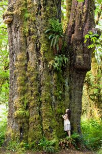 San Juan Sitka Spruce