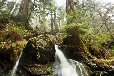 Waterfalls flow from streams running through towering ancient red cedars in the logging threatened Avatar Grove near Port Renfrew
