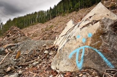 Loggers painted a sad face with its tongue sticking out making a mockery of the old-growth devastation in the background. Upper Walbran Valley