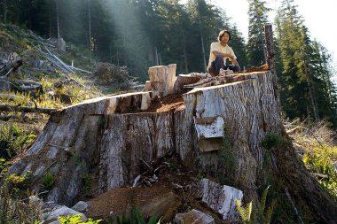 Wu atop a red cedar stump in Upper Walbran Valley.