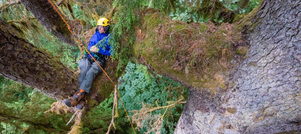 Mossome Grove Tree Climb