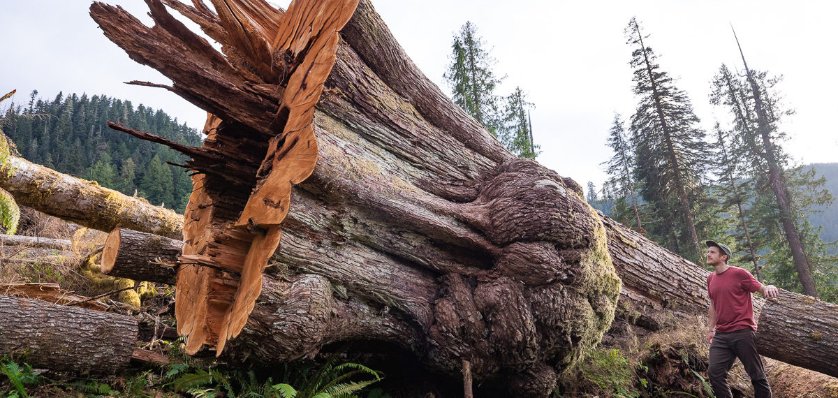 ACTION ALERT: Have your say on the BC government's Old Growth Strategy