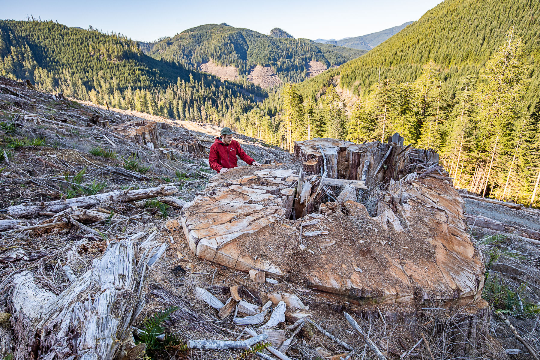 Logging of massive, ancient cedars in Caycuse watershed signals urgent need for provincial action and funding for old-growth - Ancient Forest Alliance